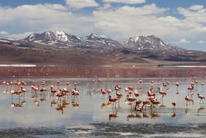 Flamingosnosalardouyuni1